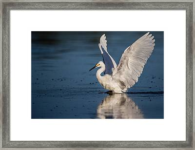 Snowy Egret Frolicking In The Water Framed Print