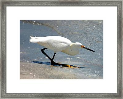 Snowy Egret In The Surf Framed Print