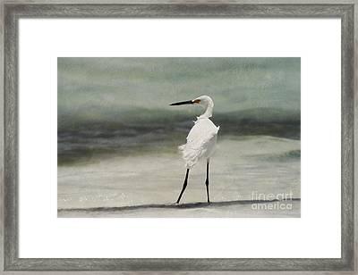 Snowy Egret Framed Print by John Edwards