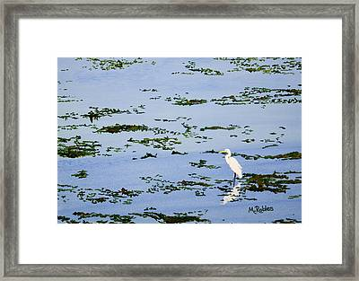 Snowy Egret Framed Print by Mike Robles