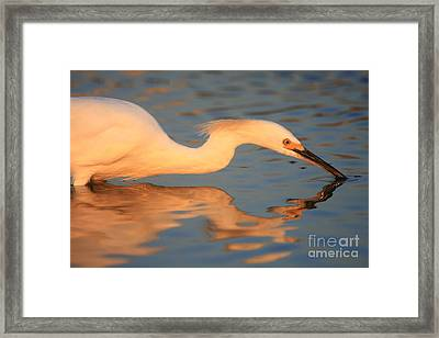 Framed Print featuring the photograph Snowy Egret Mirror by John F Tsumas