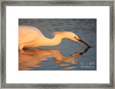 Snowy Egret Mirror Framed Print