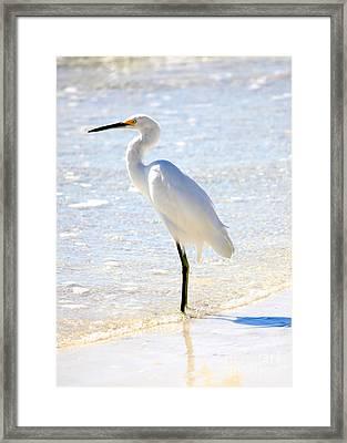 Egret On The Beach Framed Print