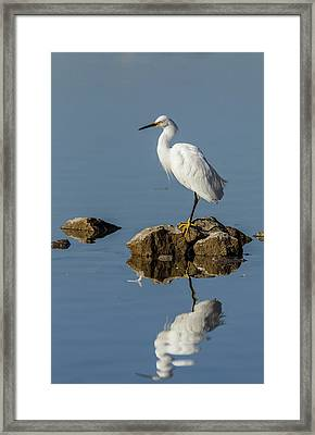 Snowy Egret Perched On Shoreline Rocks Framed Print