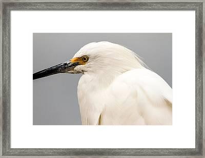 Snowy Egret Profile Framed Print