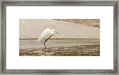 Snowy Egret Taking Advantage Of The Flood Framed Print by Donna Brown