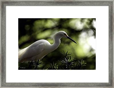 Framed Print featuring the photograph Snowy Egret by Travis Burgess