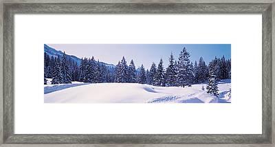 Snowy Field & Trees Oberjoch Germany Framed Print