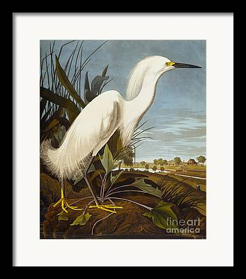 Egret Paintings Framed Prints