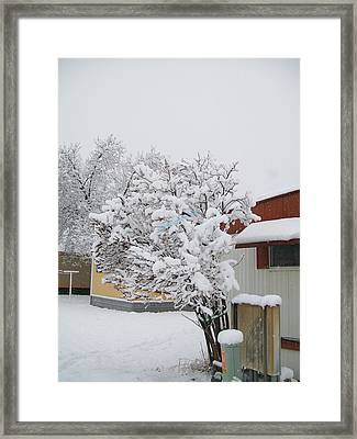 Framed Print featuring the photograph Snowy Lilac by Jewel Hengen