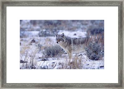 Snowy Morning Watch Framed Print