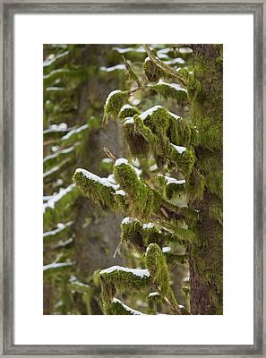 Snowy Moss Framed Print