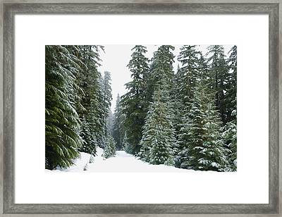 Snowy Mount Hood Forest Framed Print by Charmian Vistaunet
