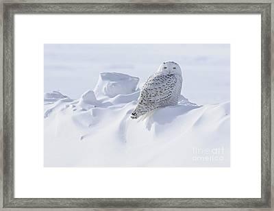 Snowy On A Snowbank Framed Print