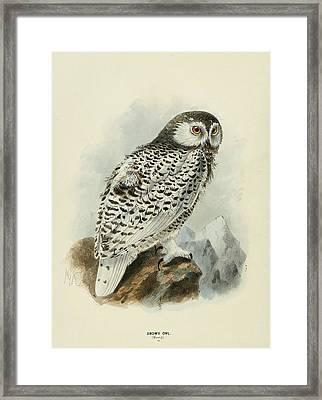 Snowy Owl 1 Framed Print by Rob Dreyer
