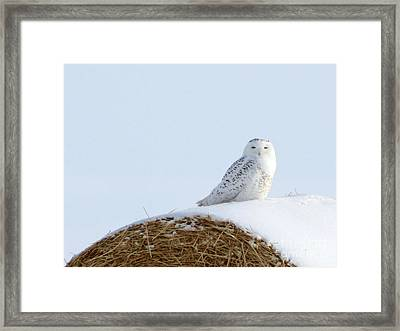 Framed Print featuring the photograph Snowy Owl by Alyce Taylor