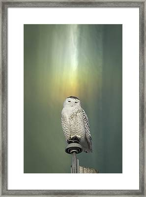 Snowy Owl And Aurora Borealis Framed Print by Thomas Young