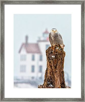 Snowy Owl At The Lighthouse Framed Print