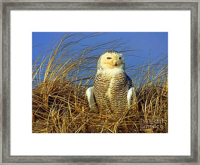 Snowy Owl  Framed Print by CapeScapes Fine Art Photography