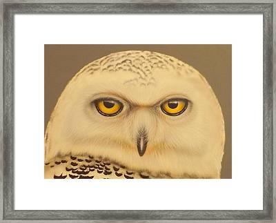 Snowy Owl Framed Print by Darren Robinson