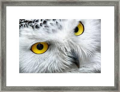 Snowy Owl Eyes Framed Print