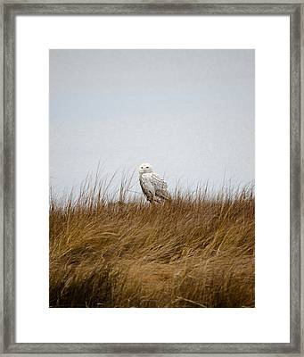 Framed Print featuring the photograph Snowy Owl by Gary Wightman