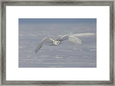 Snowy Owl Head On Framed Print by Daniel Behm
