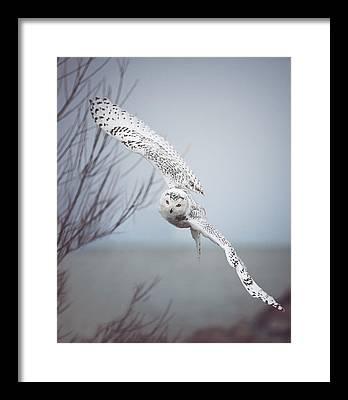Snowy Framed Prints