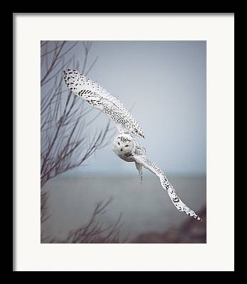 Wings Photographs Framed Prints