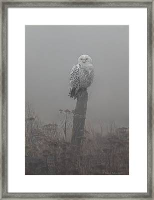 Snowy Owl  In The Mist Framed Print by Daniel Behm