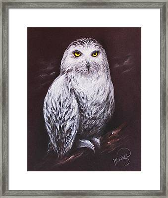 Snowy Owl In The Night Framed Print