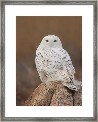 Snowy Owl Framed Print by John Burk