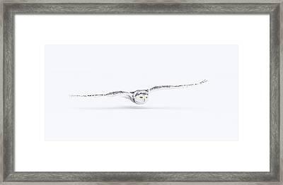Snowy Owl Framed Print by Kim Abel