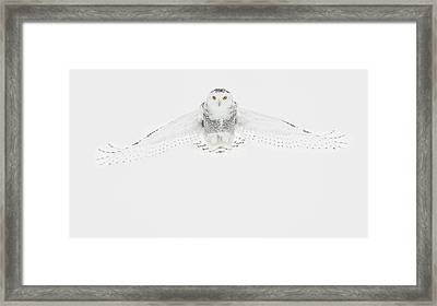 Snowy Owl Pictures 22 Framed Print