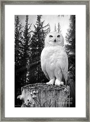 Snowy  Framed Print by Adam Olsen