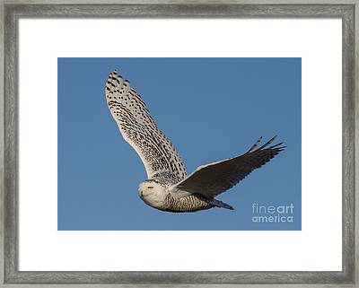 The Journey Home Framed Print