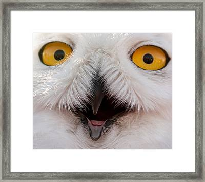 Snowy Owl Up Close And Personal Framed Print by Laura Duhaime