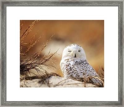 Snowy Owl Up Close Framed Print by Vicki Jauron