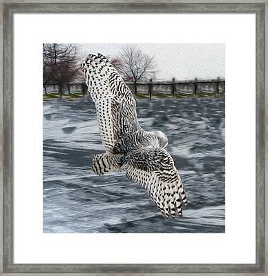Snowy Owl Wingspan Framed Print