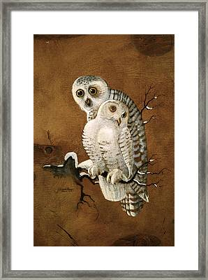 Snowy Owls Framed Print by Richard Hinger
