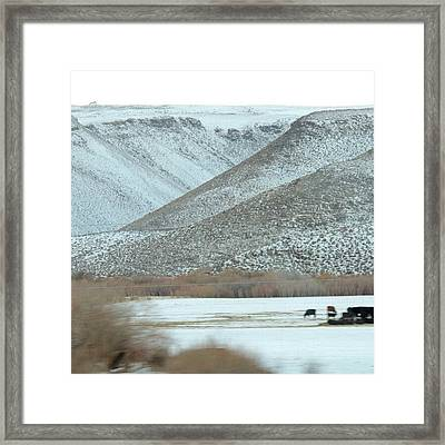 Snowy Pastures Framed Print
