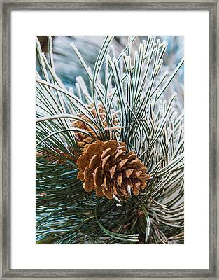 Snowy Pine Cones Framed Print