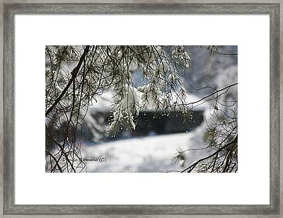 Framed Print featuring the photograph Snowy Pine by Denise Romano