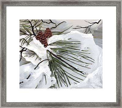 Snowy Pine  Framed Print by Jackie Case