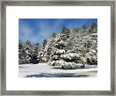Snowy Pines Framed Print by Janice Drew