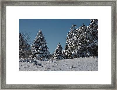 Snowy Pines Framed Print by Jeff Swanson