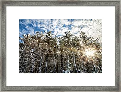 Snowy Pines With Sunflair Framed Print by Brian Boudreau