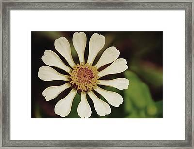 Snowy Pinwheel Framed Print by JAMART Photography