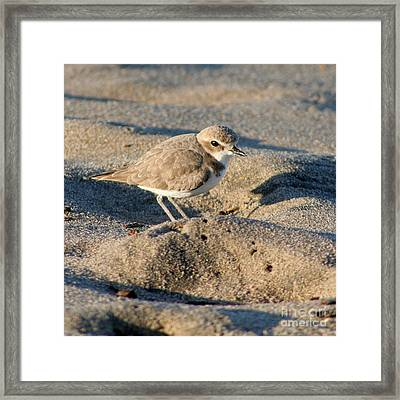 Framed Print featuring the photograph Snowy Plover by Bob and Jan Shriner