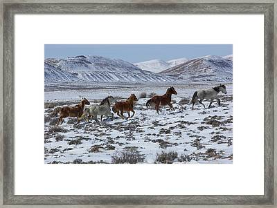 Snowy Run Framed Print